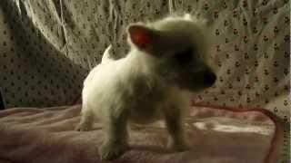 ドッグリアン東京で子犬販売。詳細は、http://dog-lien.com/puppy/479.