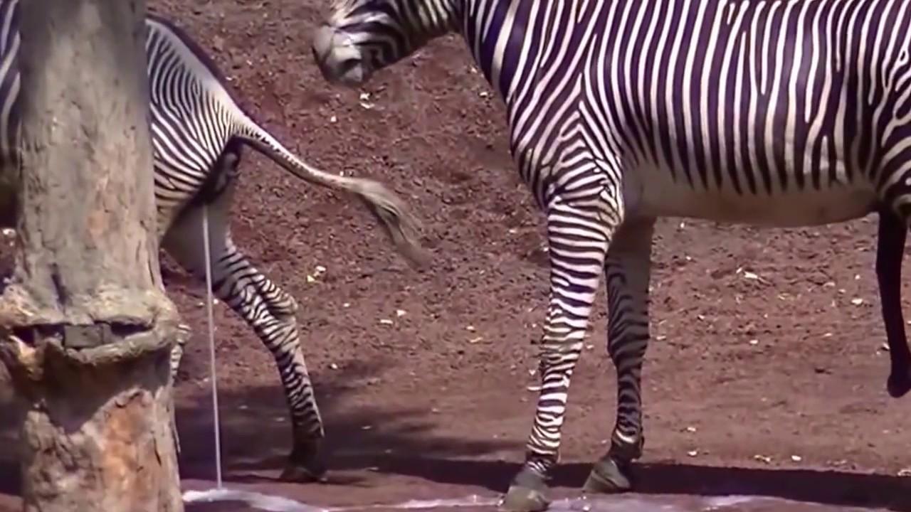 zebra-movie-sex-girls-nude