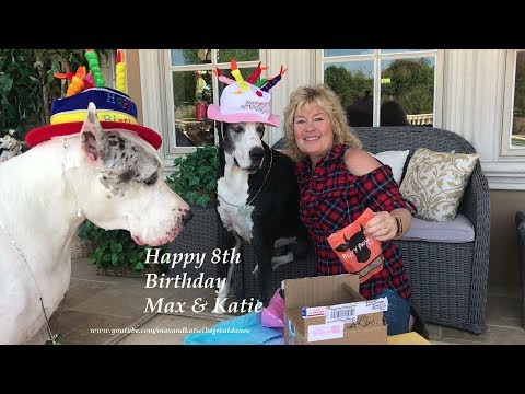 Max and Katie the Great Danes Happy 8th Birthday Celebration