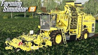 Zbiór buraka - Farming Simulator 19 | #39