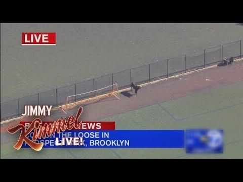 Jimmy Kimmel on Brooklyn Cow's Great Escape