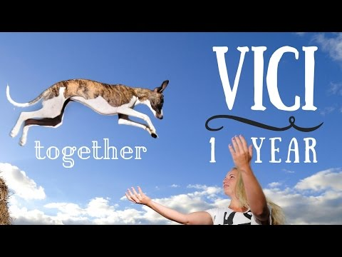 Vici The Whippet & amazing dog tricks [1 year together]