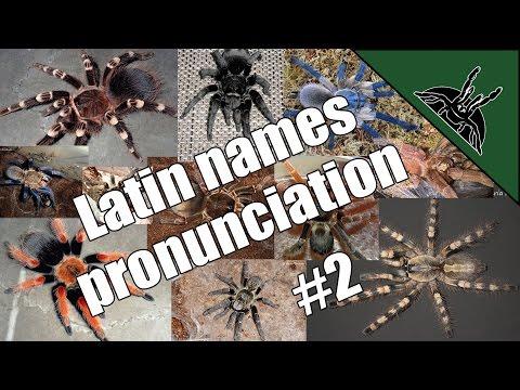 Pronunciation Of Latin/scientific Tarantula Names EP02