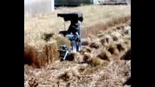 Repeat youtube video حصاد القمح في  نوبا