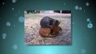 Кошки против собак. Кто кого. Топ 10 фото