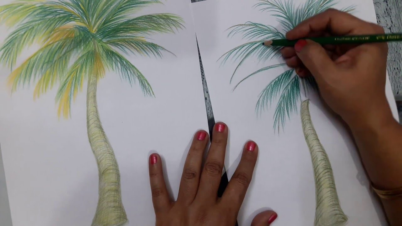 How to draw a coconut tree