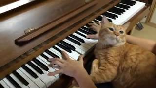 Cat Loves the Piano (Fantasie Impromptu Op.66)