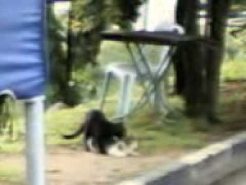 If you want to LAUGH HARD, WATCH FUNNY ANIMALS - Funny ANIMAL compilation from YouTube · Duration:  10 minutes 15 seconds