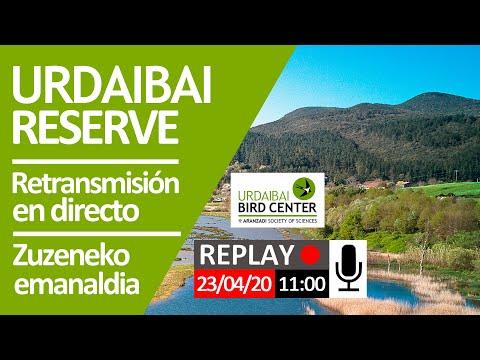 retransmisión-en-directo-2020-04-23,-sesión-matutina-(11:00)