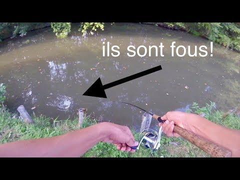Pêche des CARNASSIERS en rivière