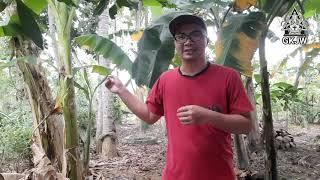 Sabda Pangon | BONGKOK LAN KLARAS | Seri 45 | Pdt. Yosep Endro P. | GKJW Silirbaru | MD BESTIM