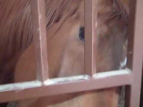 Smoky The Cowhorse (With Ida)