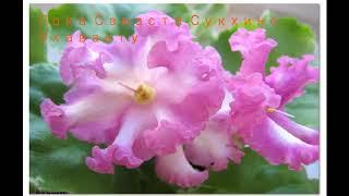 Я желаю всем счастья!!! Лока Самаста Сукхино Бхаванту.
