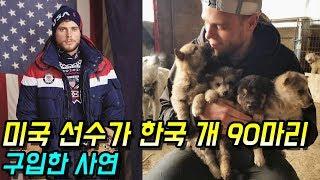 [감동]미국 선수가 한국 강아지 90마리를 구입한 눈물나는 사연 - 감동바다
