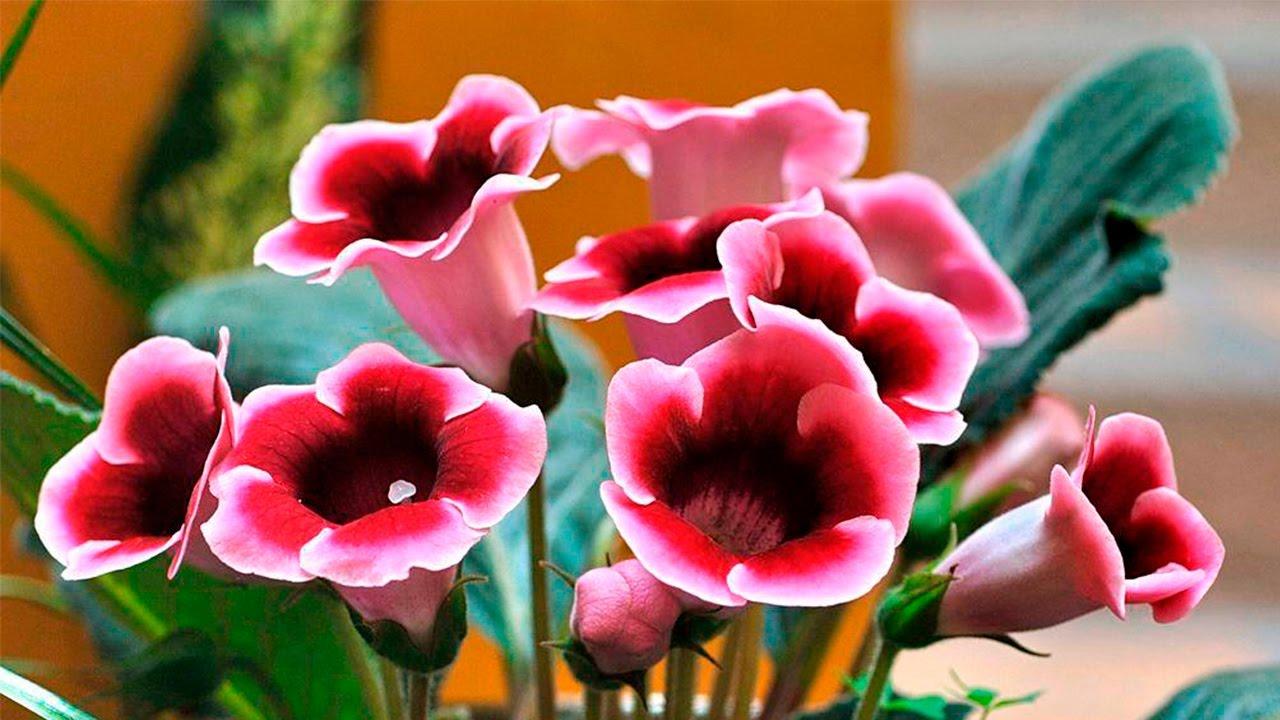 Семена комнатные растения интернет магазин семян растений семена почтой купить семена семена растений украине.