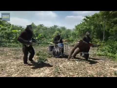 Punnama punnama monkey dance