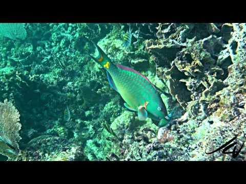 Best Caribbean Snorkeling Destination - YouTube