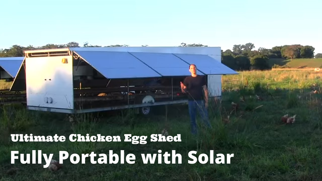 Ultimate Chicken Egg Shed