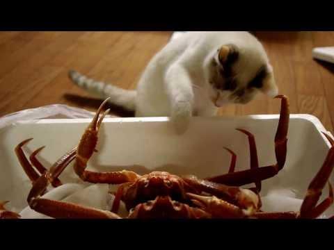Cat vs Crab!