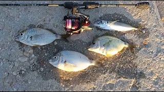 Морская рыбалка Первый ласкирь 2021