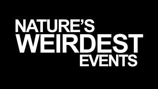 Nature's Weirdest Events Score: Series 1-3 Theme