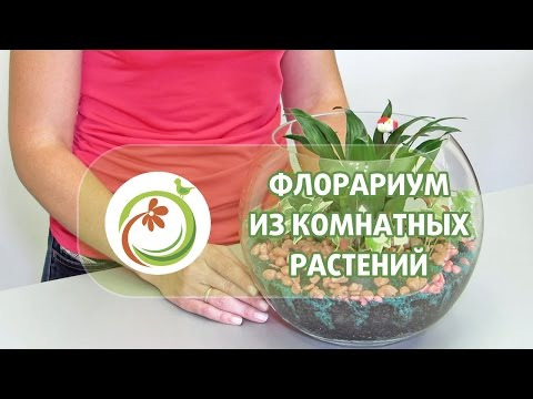 """Как сделать """"Флорариум"""" из комнатных растений. Мастер класс практической флористики."""