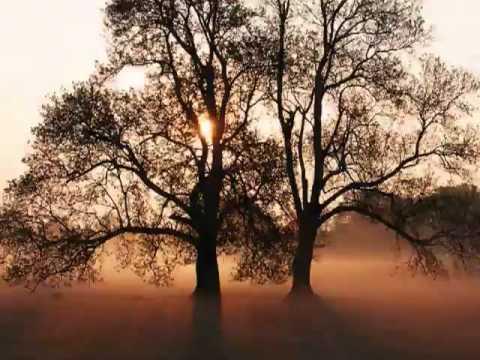 Xavier Rudd  Gift Of The Trees