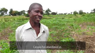 Cassava Farmer Wilson Donald Speaks Out about Cassava Diseases