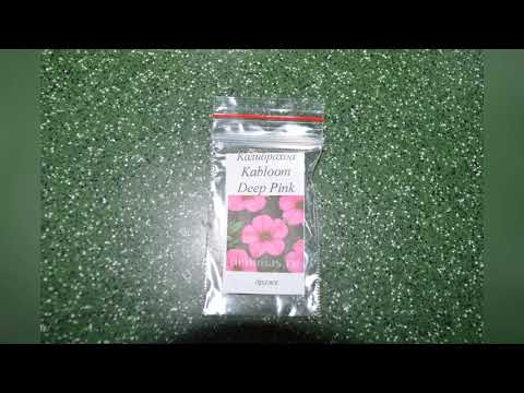 семена петунии интернет магазин