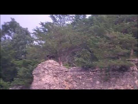 Decorah Eagles- Eaglet On The Bluff 07-14-18