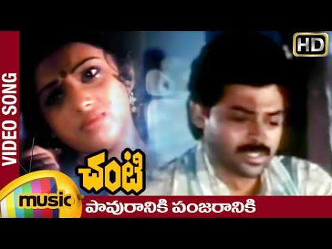 Chanti Telugu Movie Video Songs | Pavuraniki Panjaraniki Telugu Video song | Venkatesh | Meena