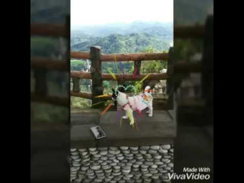 胡美蘭家的娃娃 : 茶茶晨騎大山背記