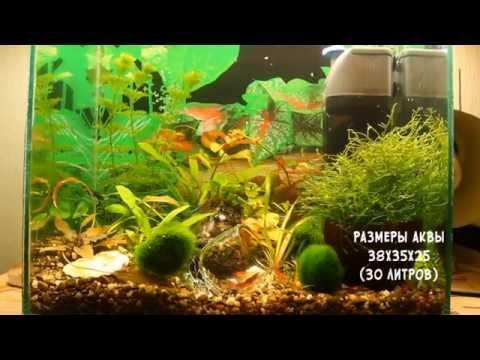 Мой первый аквариум с которого всё начиналось 30 литров (качество 4К) смотреть в хорошем качестве