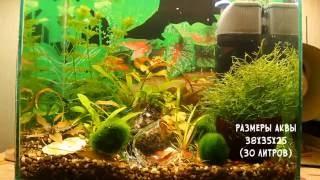 Мой первый аквариум с которого всё начиналось! 30 литров (качество 4К)(, 2016-06-25T21:01:04.000Z)