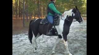 Horse for Sale on Craigslist