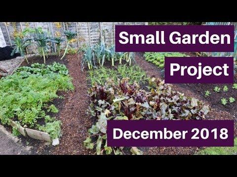 Walk On Beds, Winter Harvests - Small Garden (7) December 2018