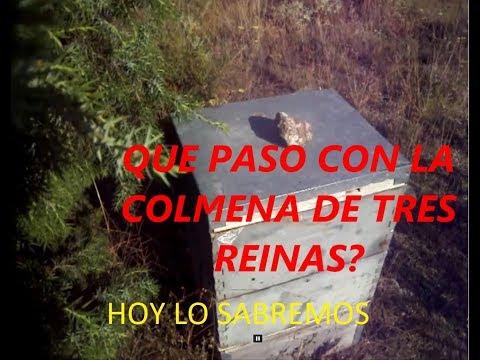 COLMENA DE TRES REINAS, FINAL