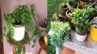 5 Plantas Difíceis de Matar!