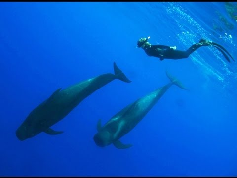Swimming with pilot whales in Kona, Hawaii