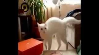 Faze haioase cu pisici cum se sperie tare de tot! Razi cu lacrimi