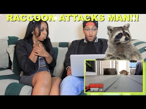 Fun Couple Meme : Couple reacts : raccoon attacks homeowner hitting it with a broom
