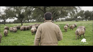 Ibéricos La Encina | Publirreportaje | Javier Oliver Films