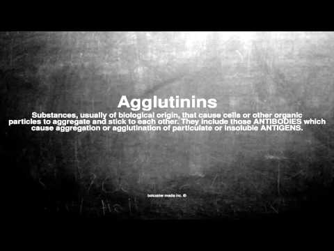 Medical vocabulary: What does Agglutinins mean