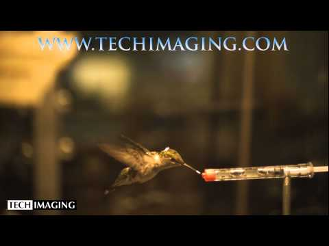High Speed Camera Video - Hummingbird