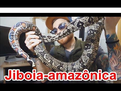 Papo de Biólogo: Jiboia-amazônica