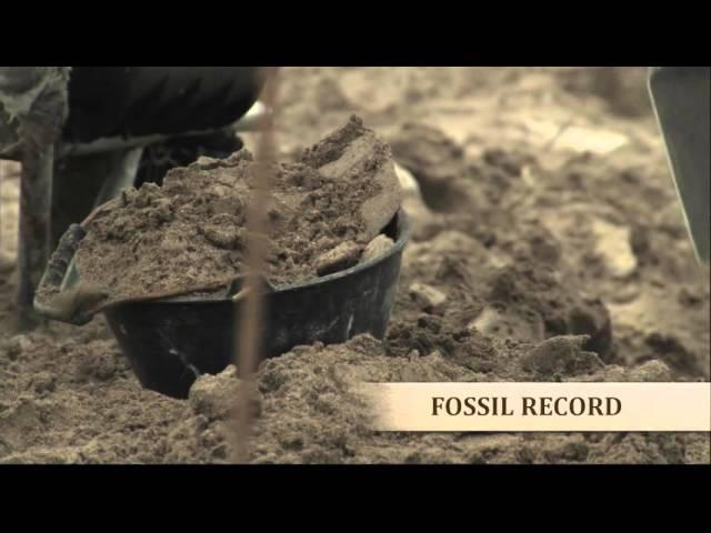 Sunday Night Movie: Evolution's Achilles' Heels