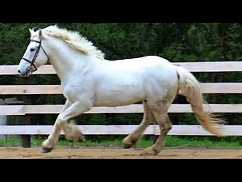 Ballad of the Irish Horse || Full Documentary with subtitles