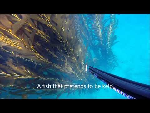 Spearfishing Malibu 1/2014