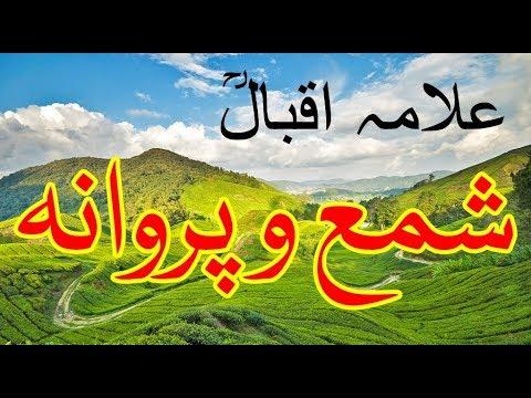 Best Urdu Nazam of Allama Iqbal | Iqbal...