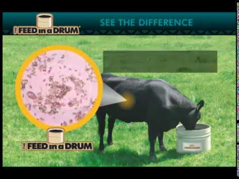 See the Difference - The Feed in a Drum